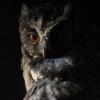 730a2a owl icon