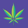 F82f97 marijuana spot illustration2