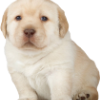 111c55 perro