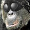 F9b9d3 chimpanze2