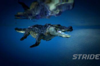 392a52 crocs4