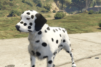 07075c dalmatian2