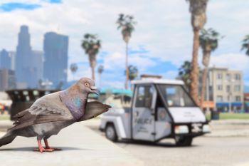 Da4b3d pigeonpatrol13