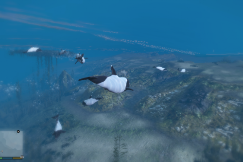 Commerson's Dolphin skin for Dolphin
