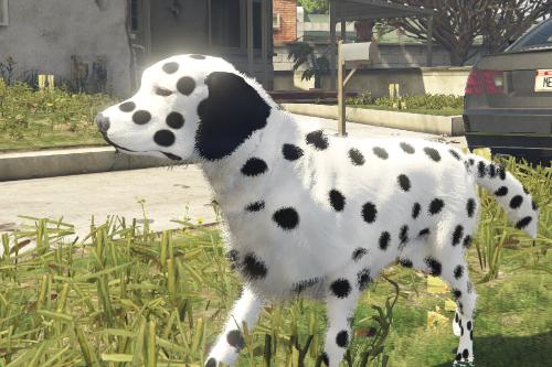 07075c dalmatian1