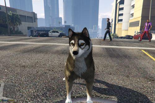 5f1397 wolf1