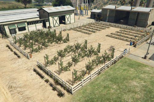 Madrazo Ranch - Outdoor planting
