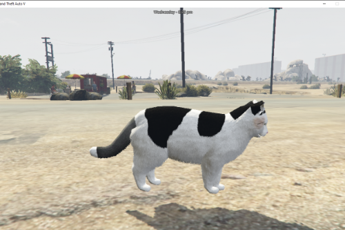 My May cat from in real life