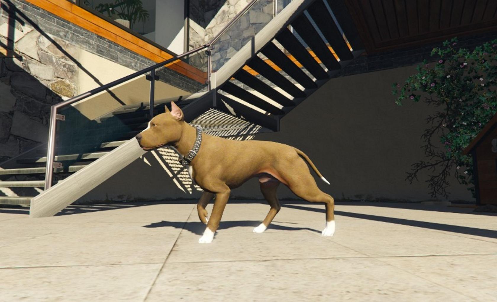 Pit bull (Replace Chop) - GTA5-Mods com